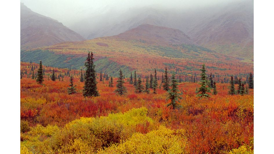 FALL-ing Into Alaska: Travel Like A Local