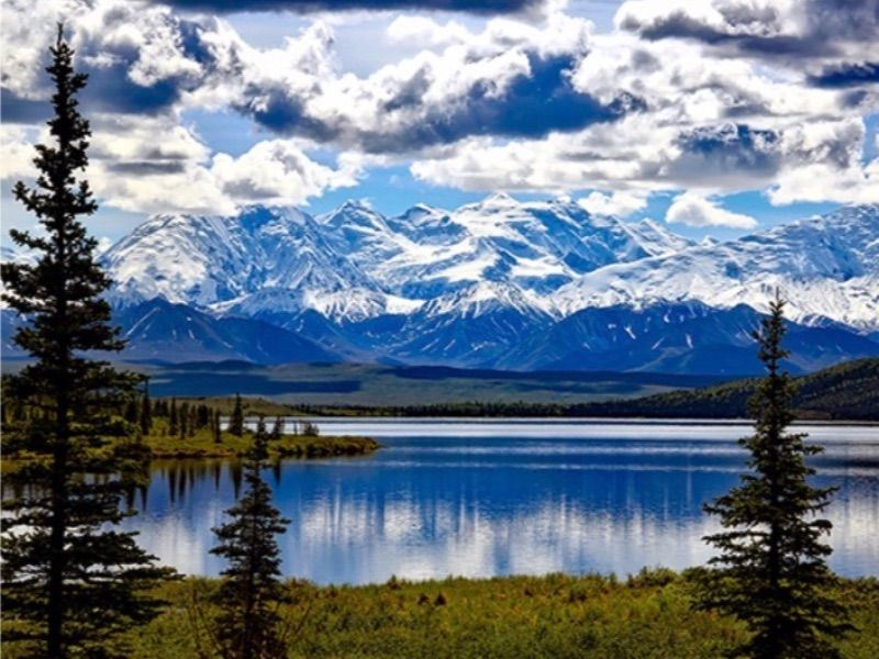 Top 5 Animals to See in Denali National Park