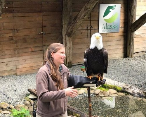 Eagles, Raptors & Rainforest Experience