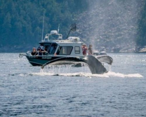 Kenai Fjords and Resurrection Bay Half Day Tour
