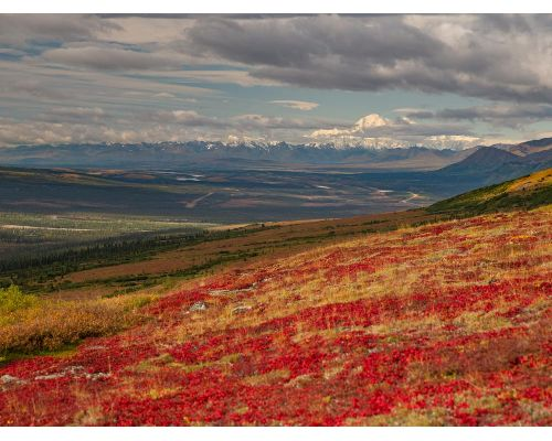 Denali Heli-Hiking Expedition