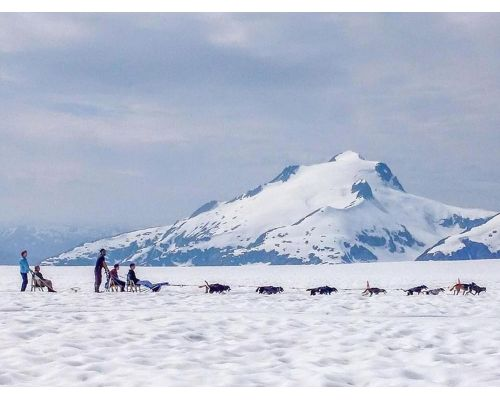 Juneau Dog Sledding On The Mendenhall Glacier