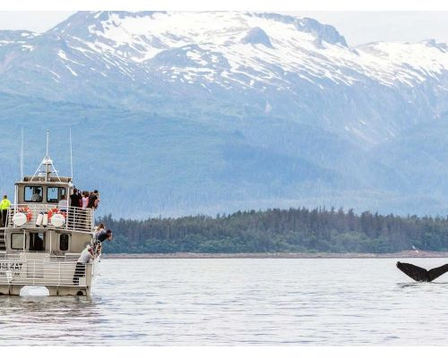 Deluxe Juneau Whale Watching Tour